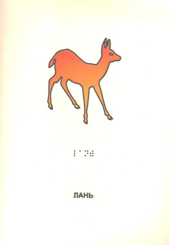 """Иллюстрация к книге """"Дикие животные"""". Лань."""