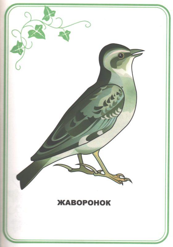 """Иллюстрация к книге """"Наши птицы. Загадки"""". Жаворонок"""