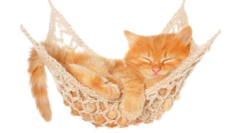 Котенок спит в гамаке